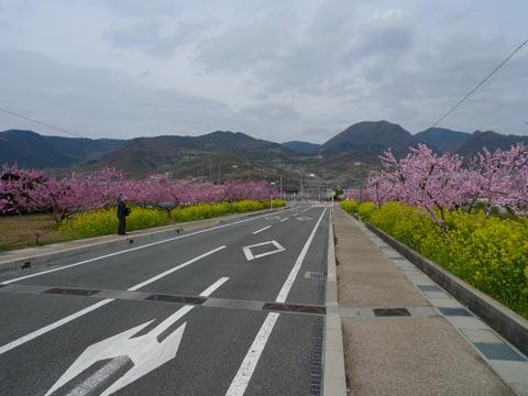 1005momo_nanohana.jpg