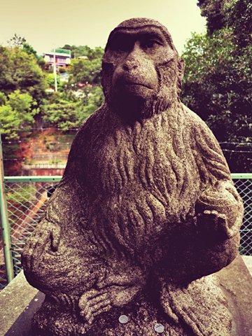 ハンサム猿
