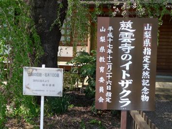 itozakura-kanban.jpg