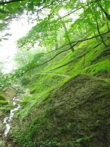 谷沿いの川