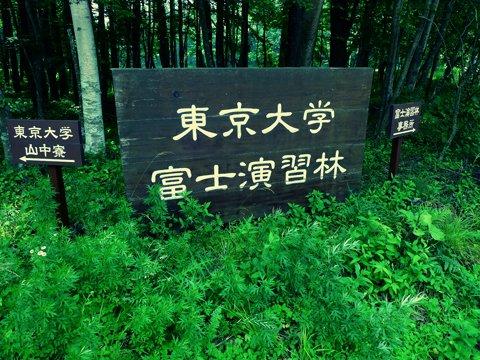 東大演習林