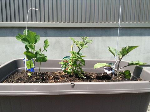 野菜育てるョ